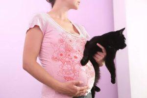 Беременность, кот