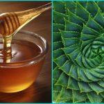 Рецепт от туберкулеза с алоэ и медом