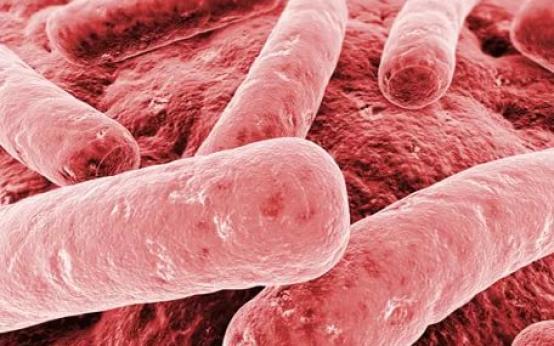 Как проявляется клебсиелла пневмония у взрослых