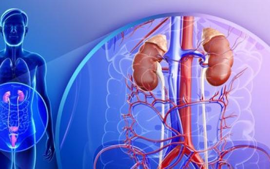 4 основных симптома туберкулеза мочеполовой системы