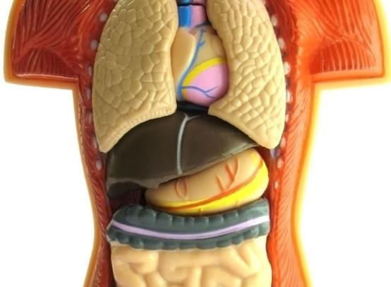 Что делать если пошли метастазы в брюшной полости