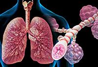 Бронхи, астма