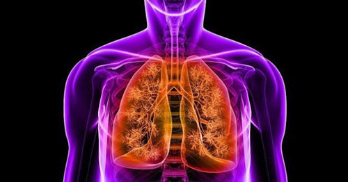 Легкие, пневмония